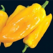 Sweet Pepper Marconi Yellow